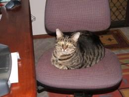 Slim on office chair