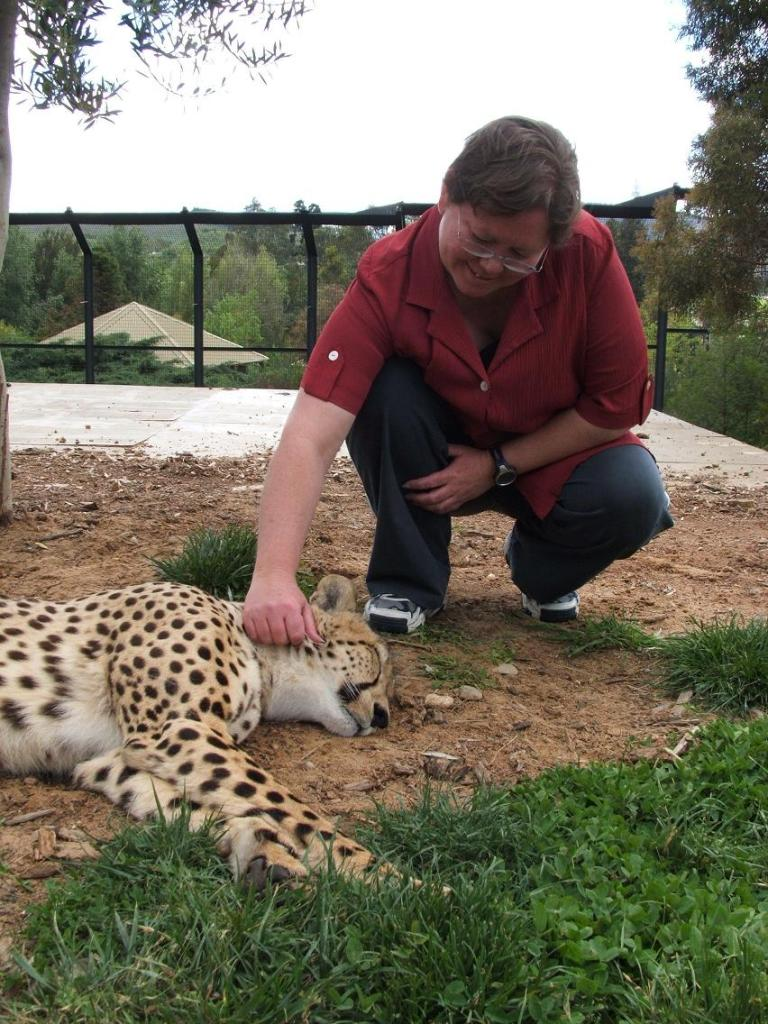 Cage scratches the neck of a Cheetah